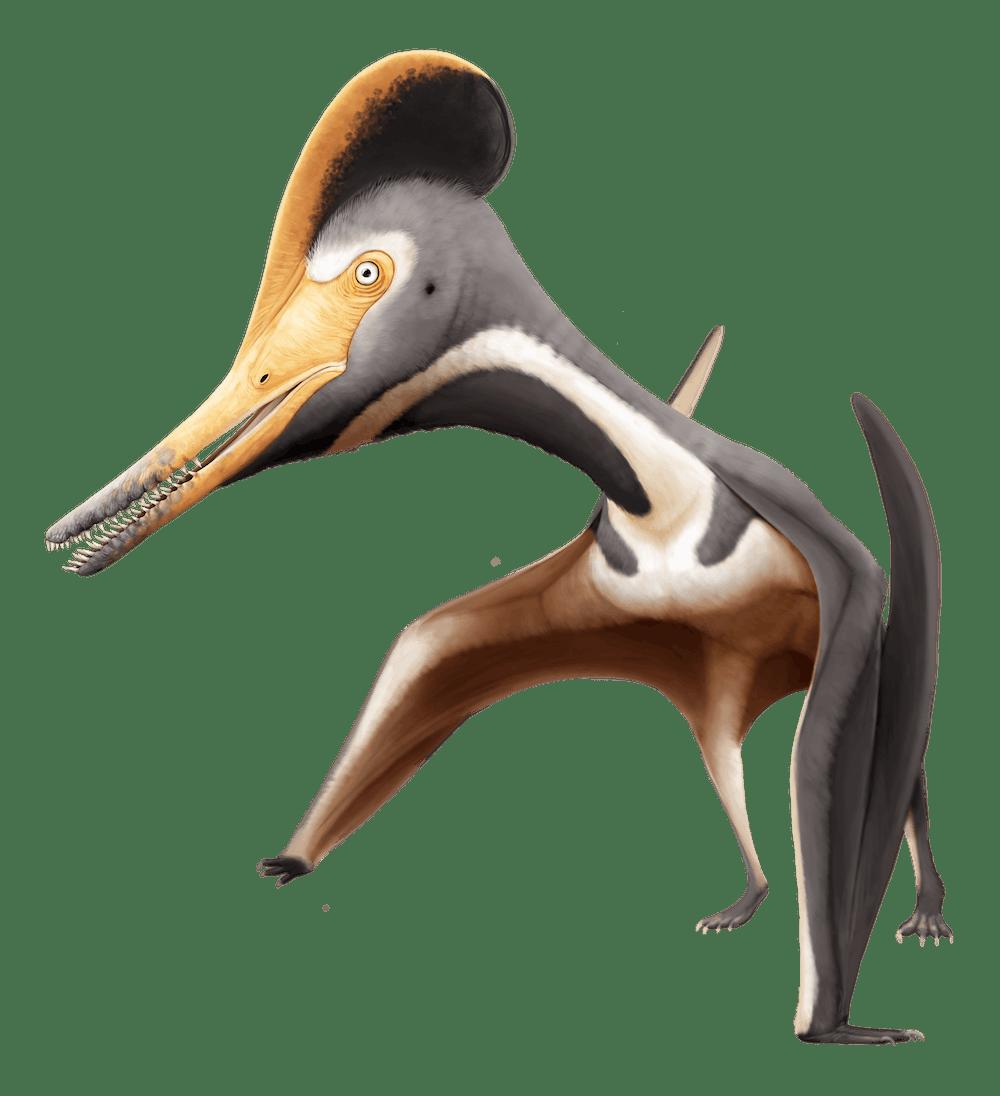 Diopecephalus