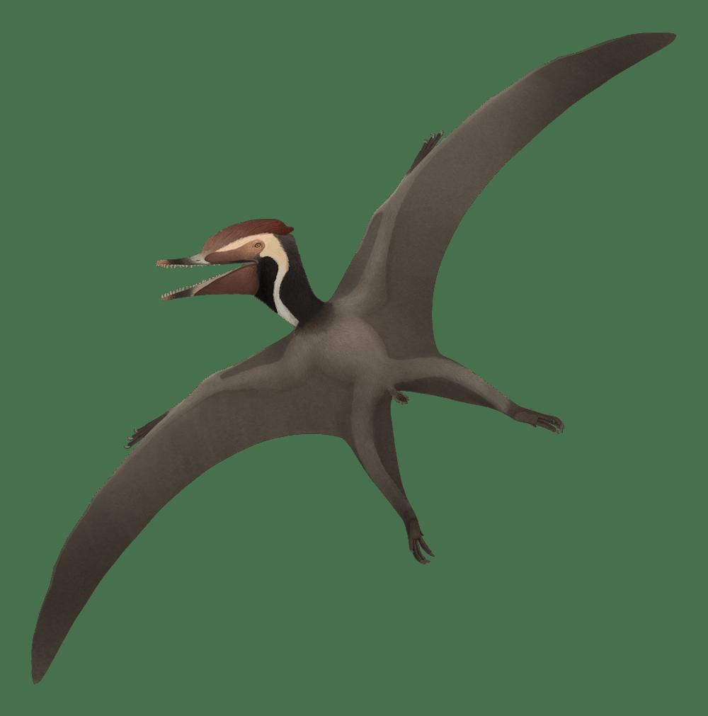 Herbstosaurus