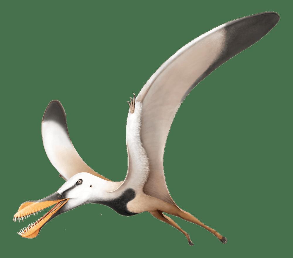 Santanadactylus