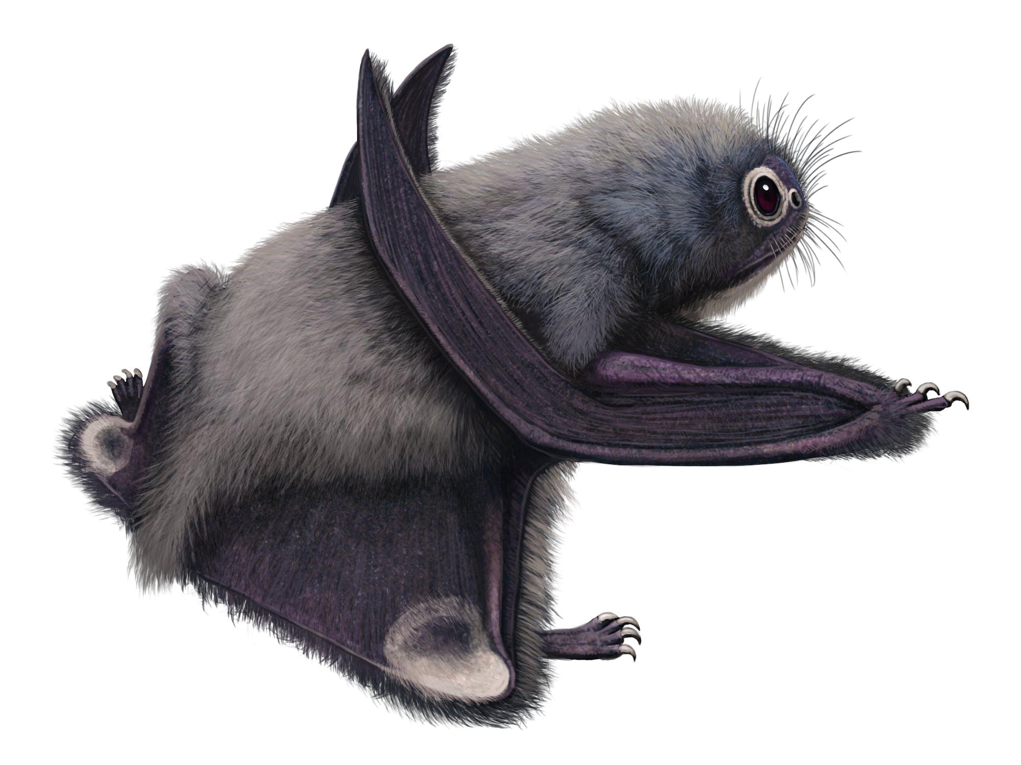 Anurognathus - Pteros