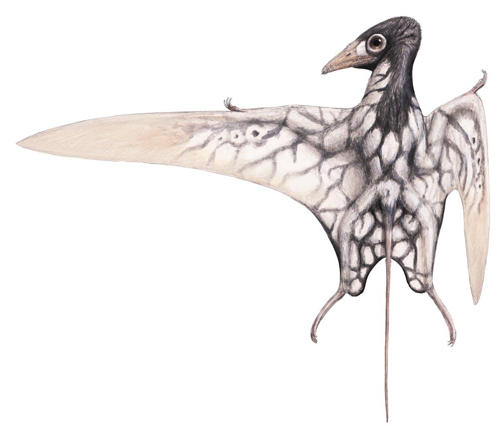 Arcticodactylus