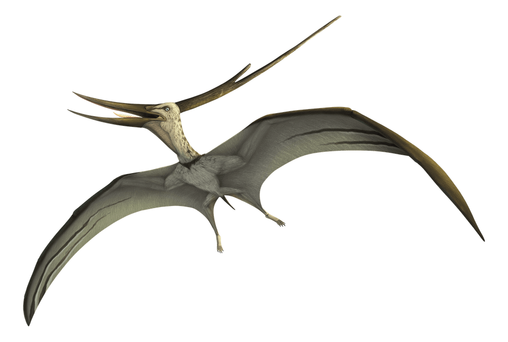Barbaridactylus