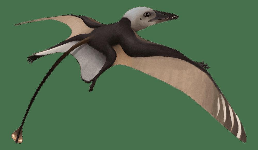 Bergamodactylus