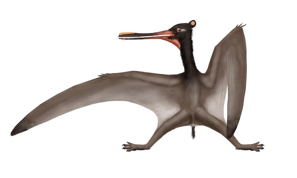 Cathayopterus