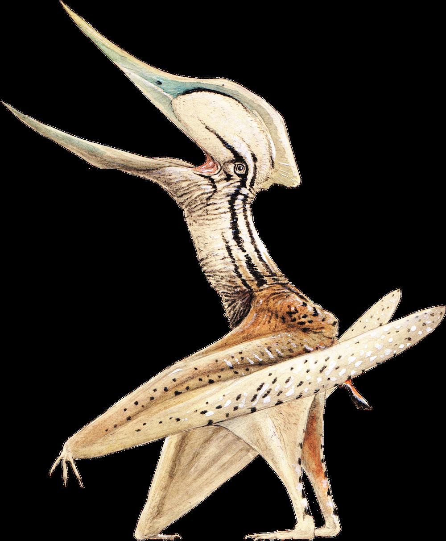 Chaoyangopterus