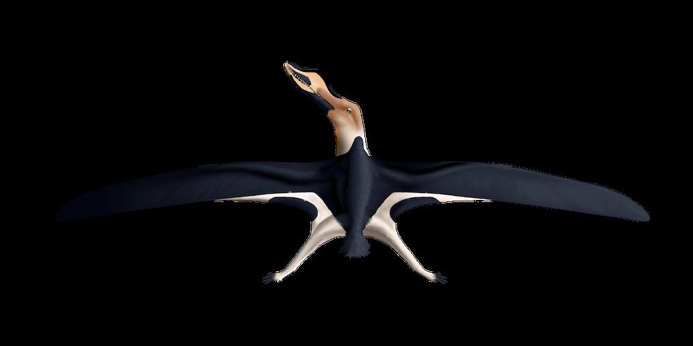 Cimoliopterus