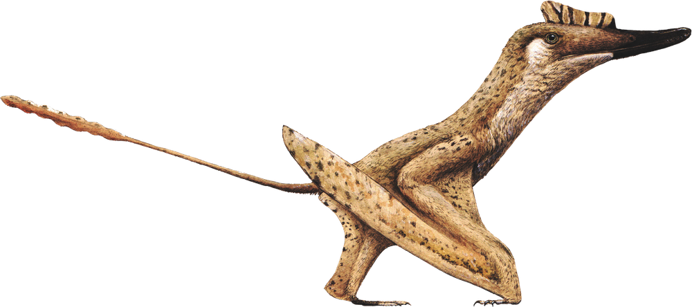 Darwinopterus linglongtaensis