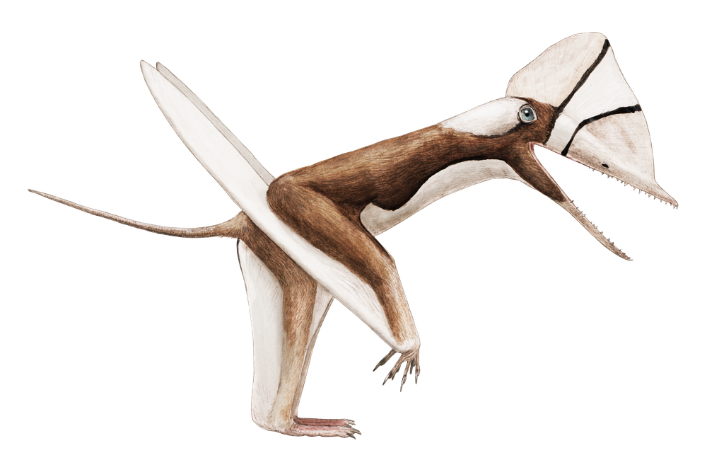 Douzhanopterus