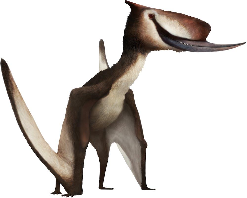 Dsungaripterus