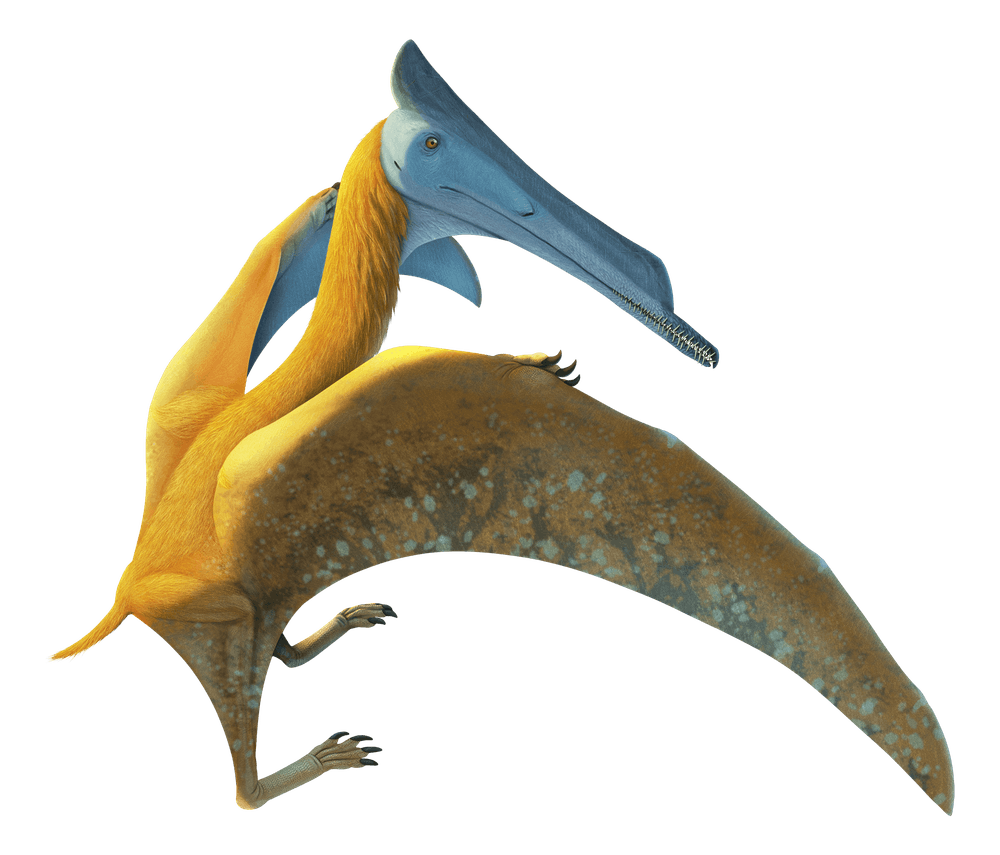 Elanodactylus
