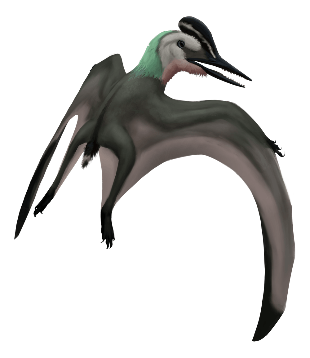 Eosipterus