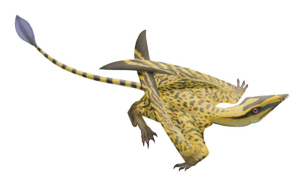 Faxinalipterus