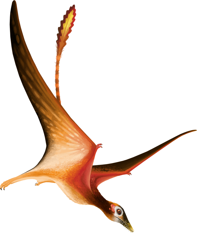 Fenghuangopterus