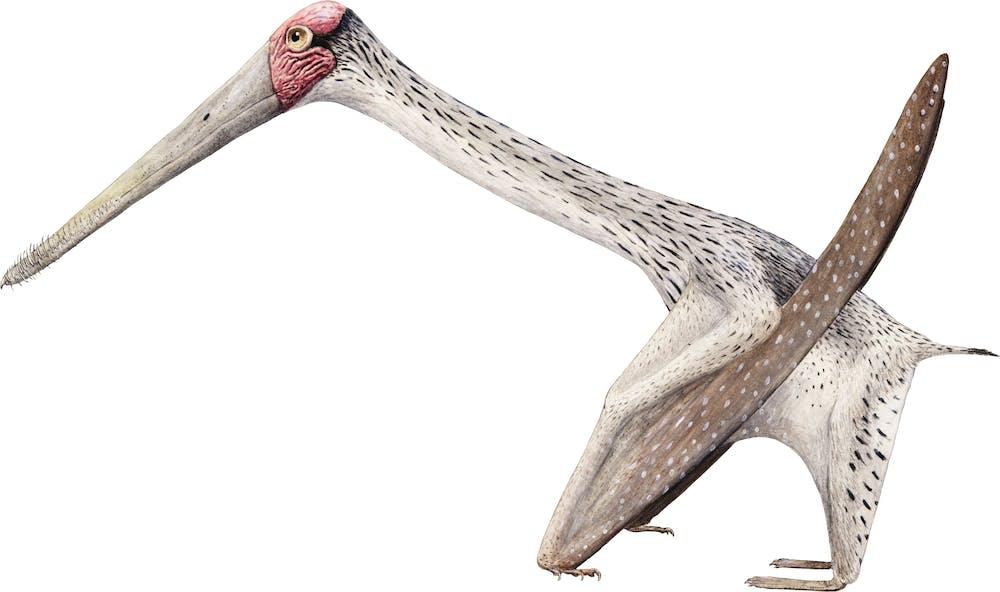Forfexopterus