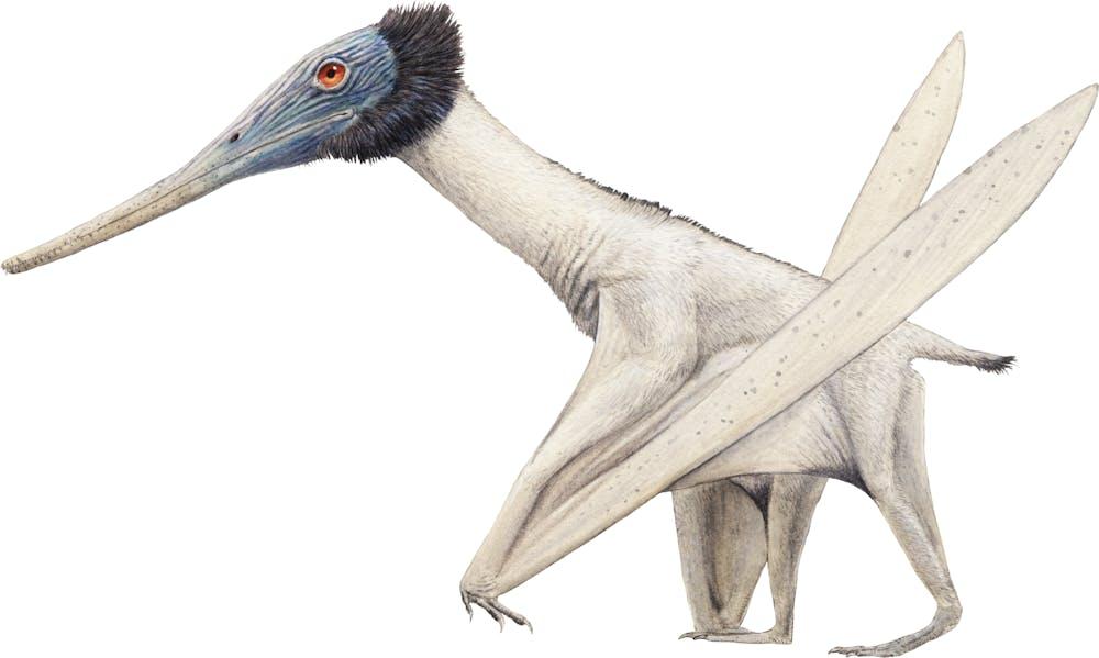 Gladocephaloideus