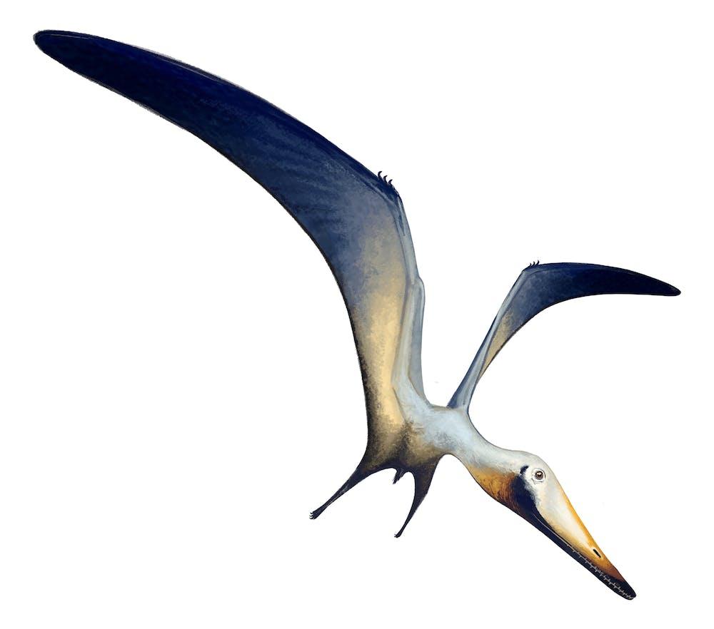 Hongshanopterus