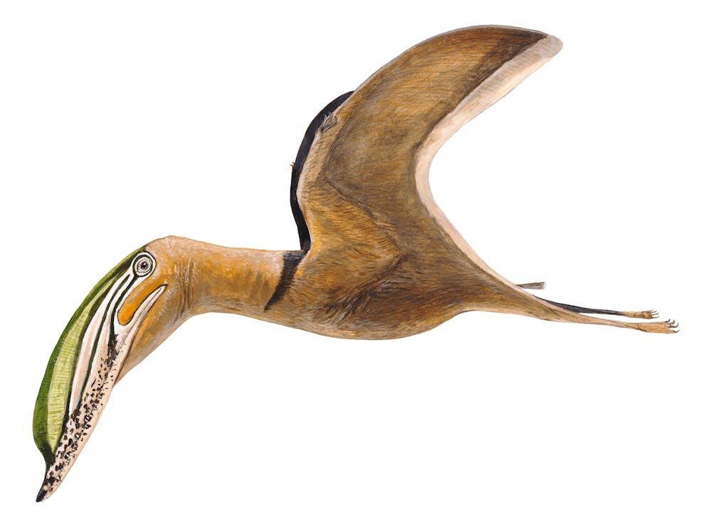 Iberodactylus