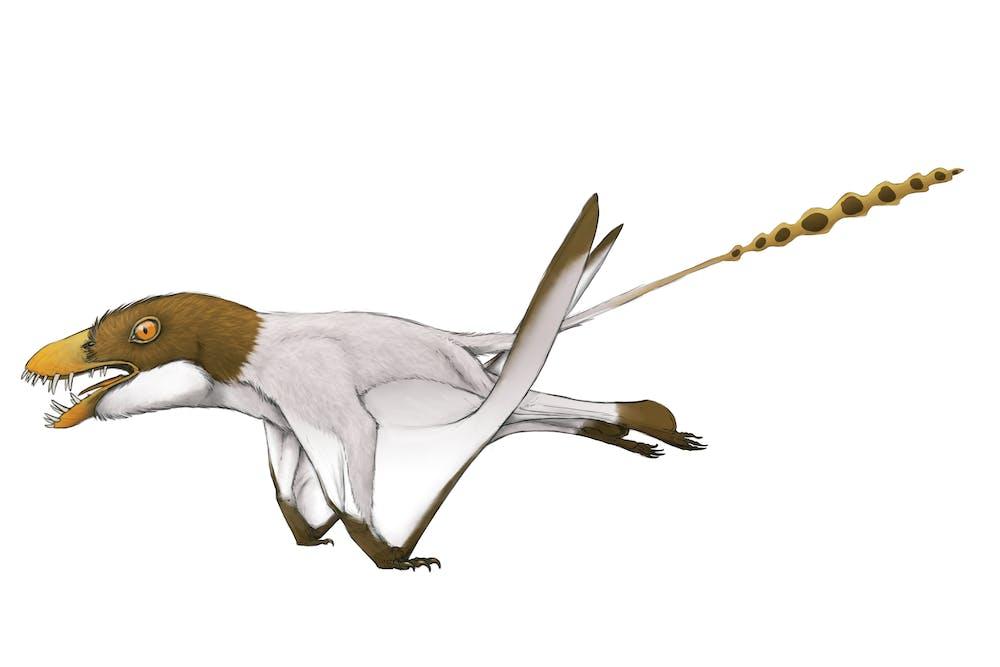 Jianchangnathus