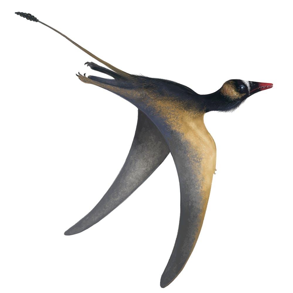 Jianchangopterus