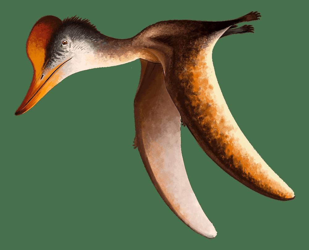 Kepodactylus