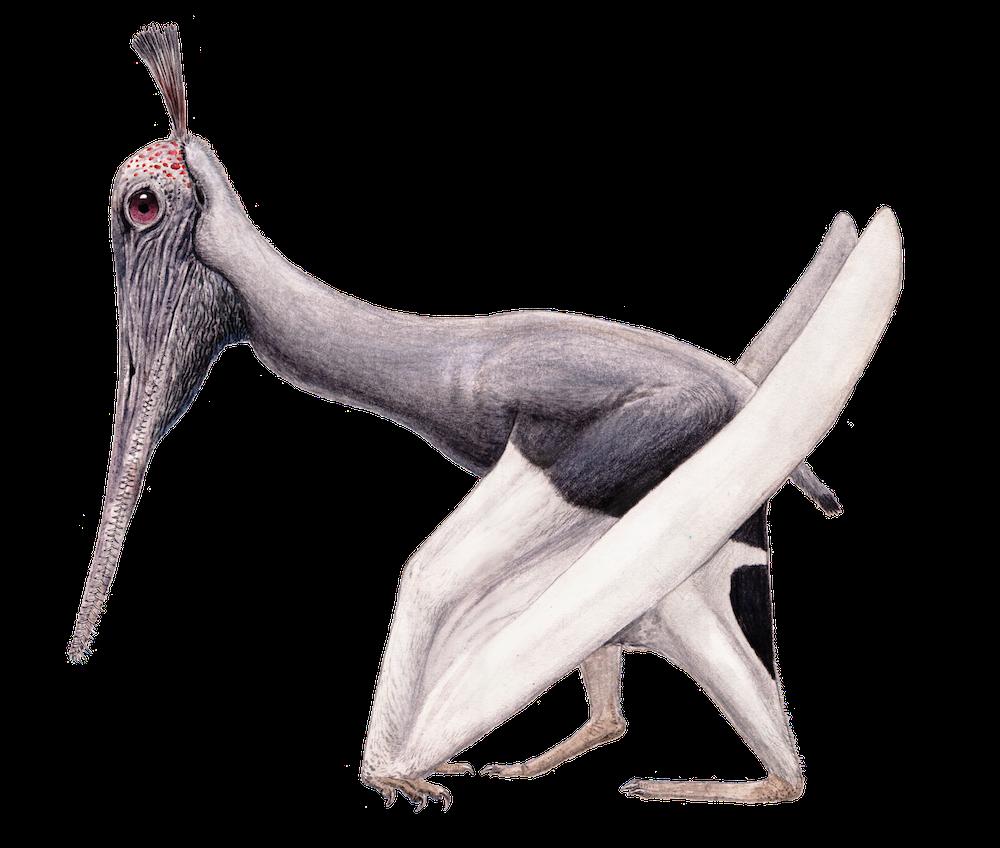 Liaodactylus