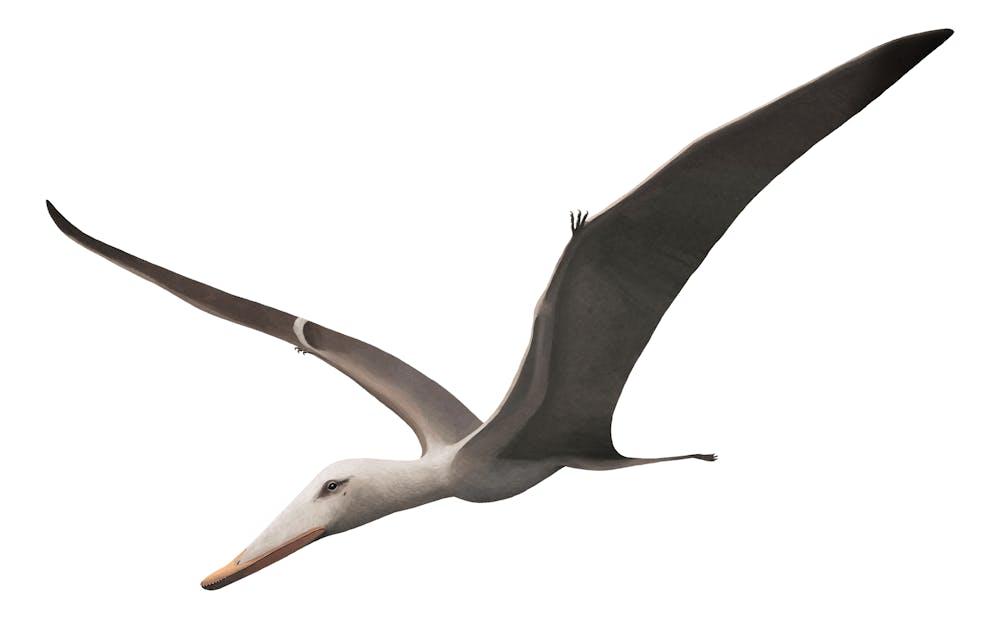 Liaoxipterus