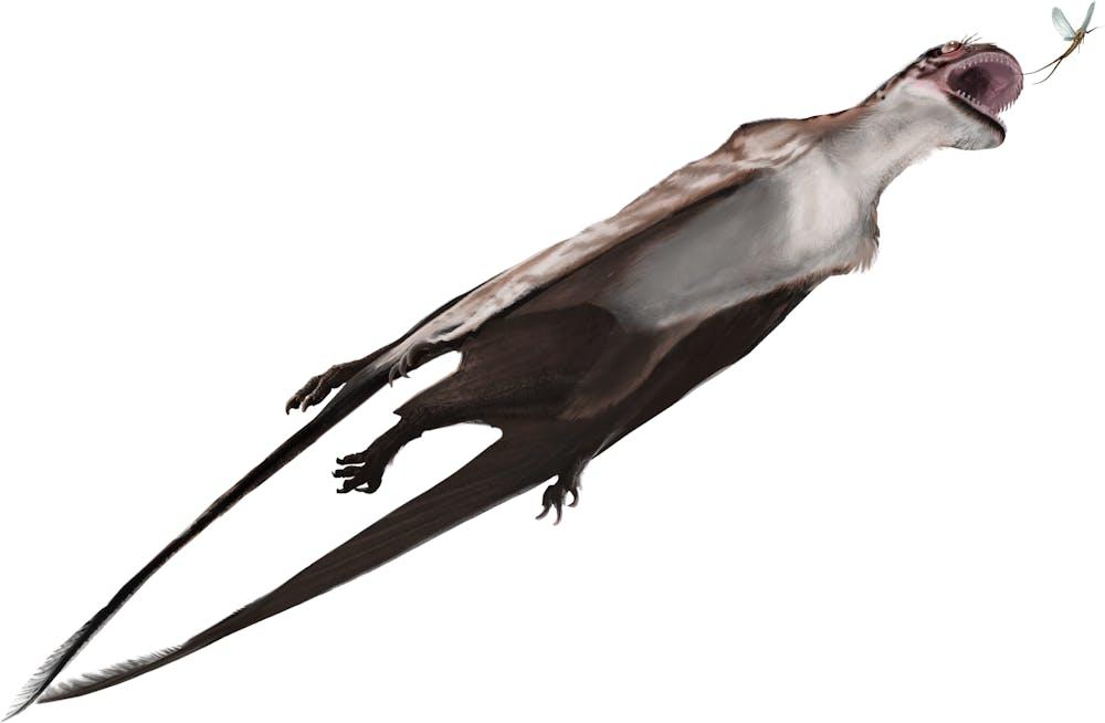 Mesadactylus