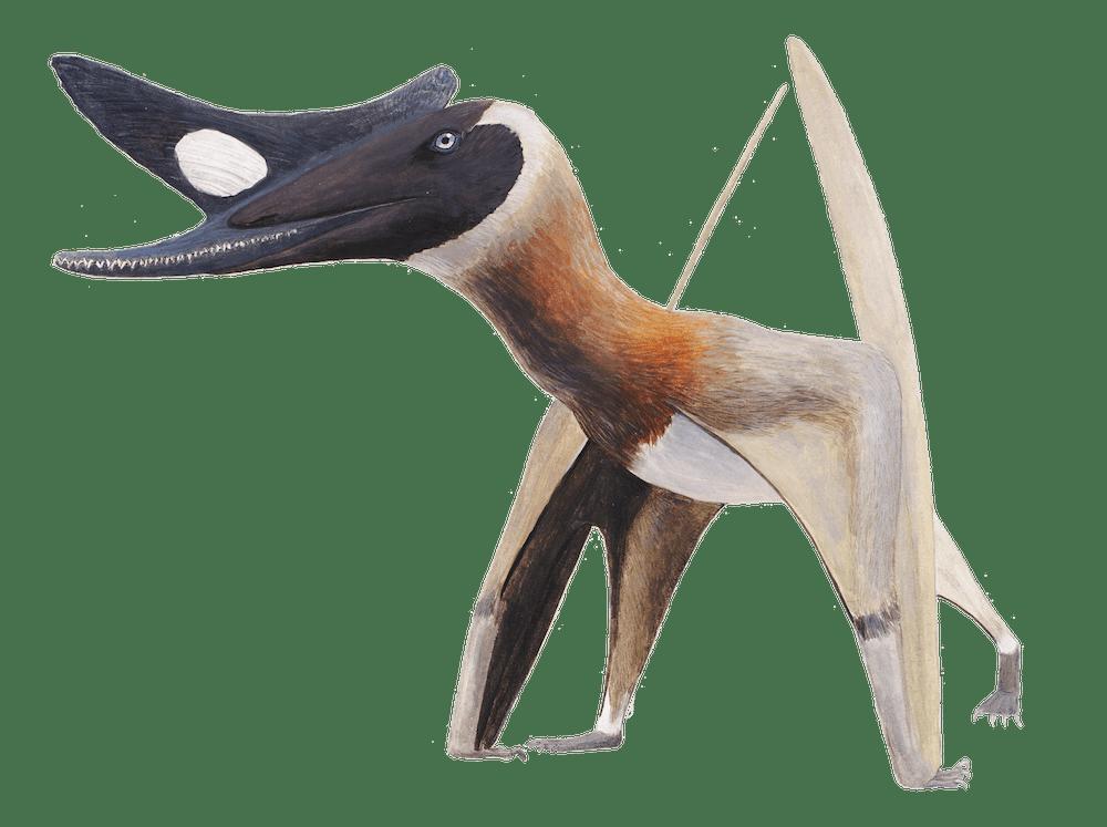 Normannognathus
