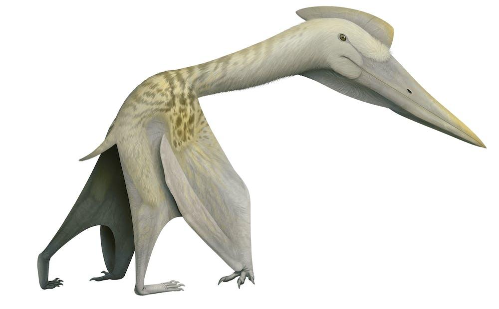 Padrillo Pterosaur