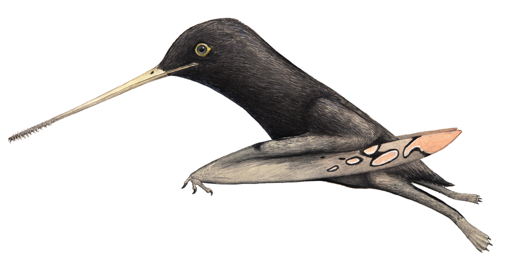 Pangupterus