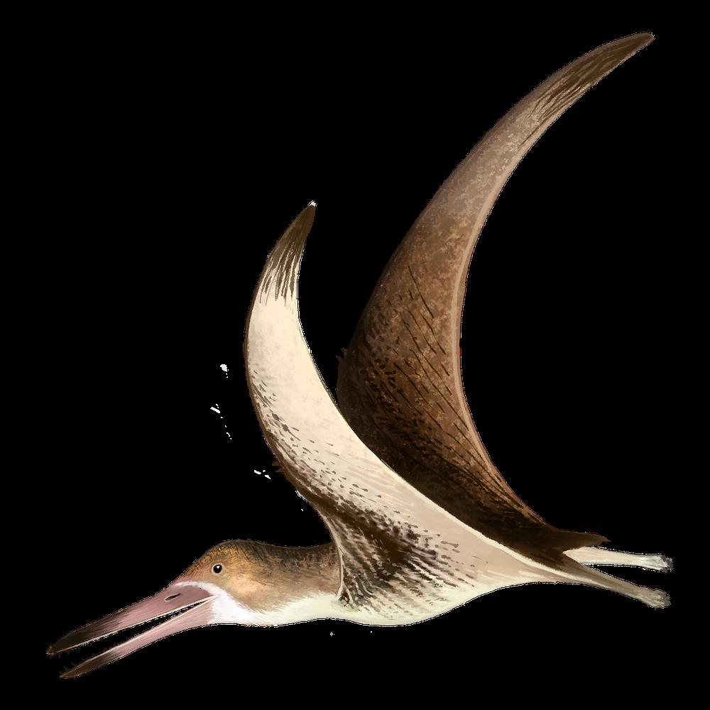 Prejanopterus