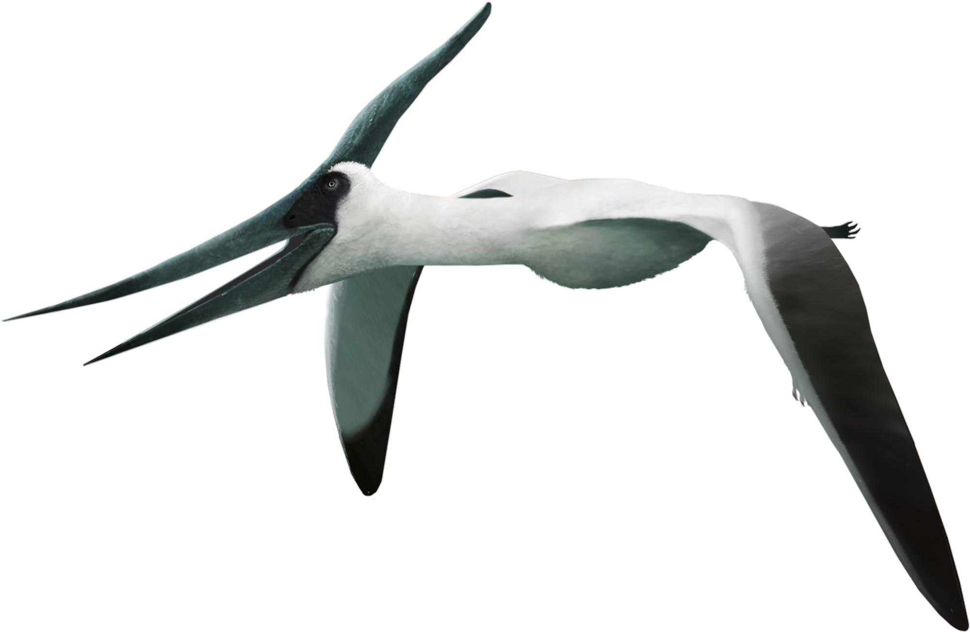 pteranodon-longiceps_julio-lacerda.png?w