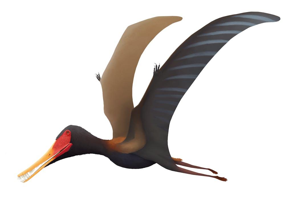 Pterofiltrus
