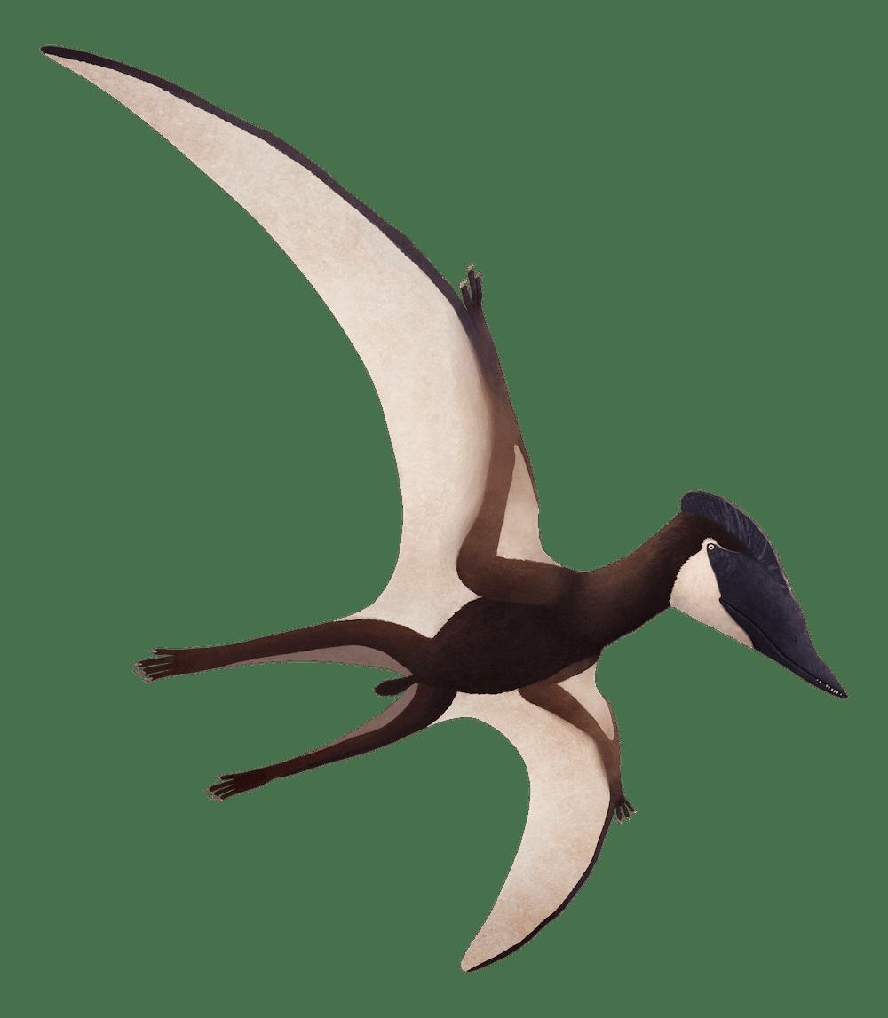 Puntanipterus