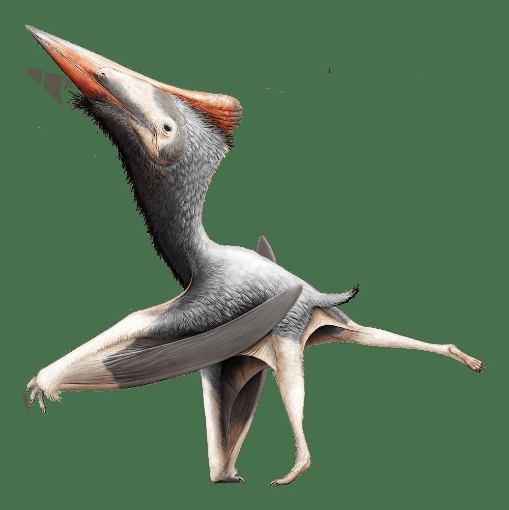 Radiodactylus