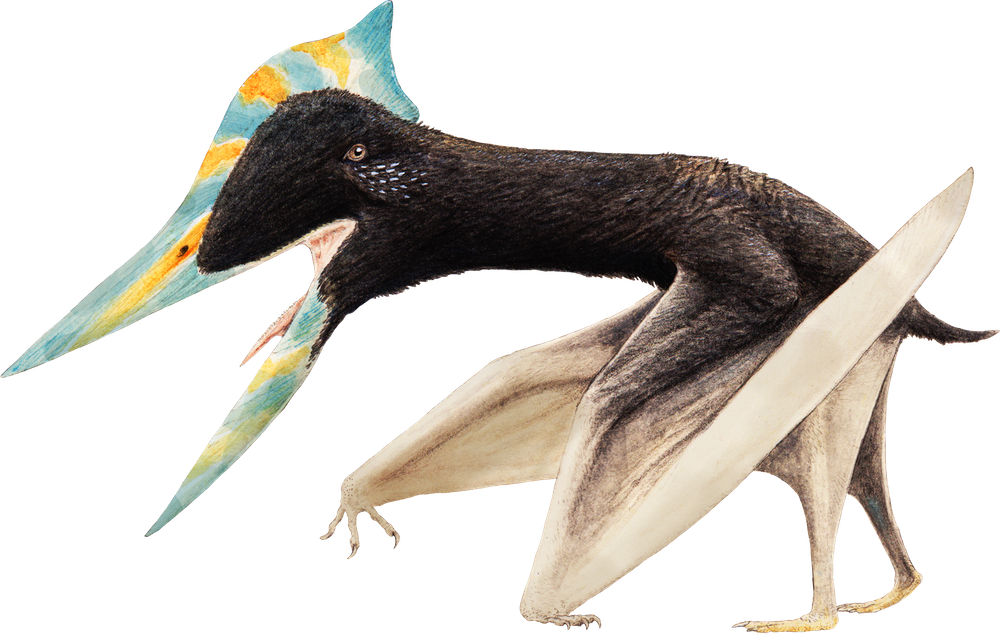Shenzhoupterus