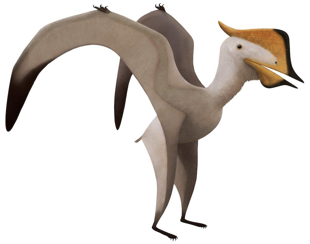 Sinopterus