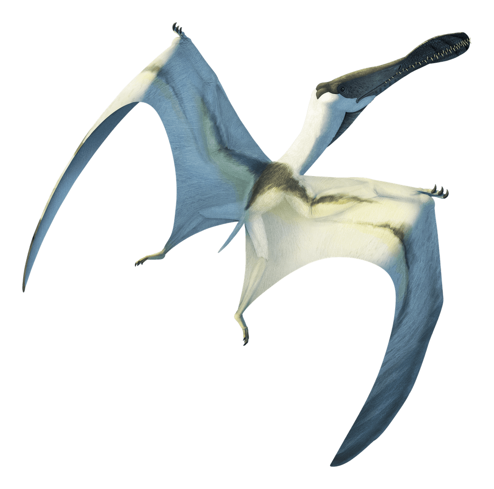 Siroccopteryx