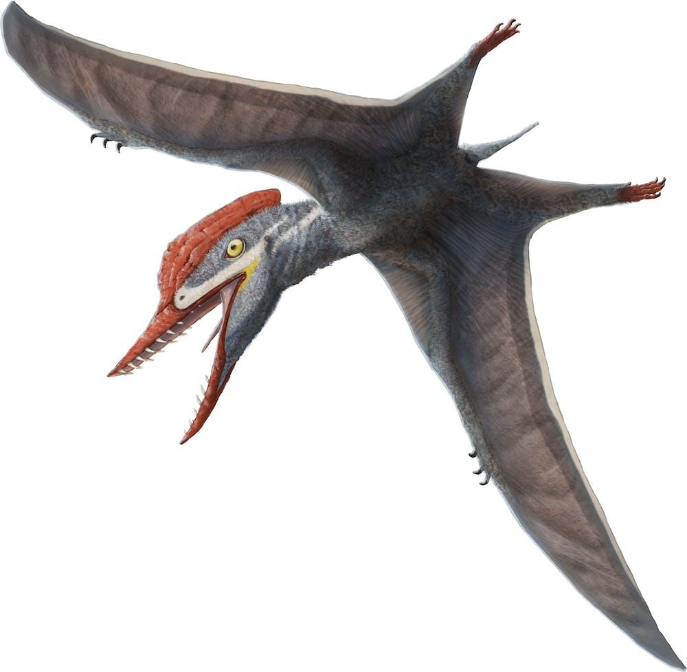 Tendaguripterus